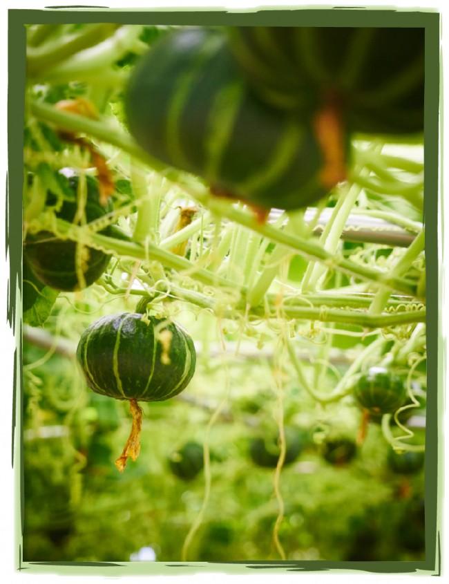 JTG 04-photo frames-02.jpg