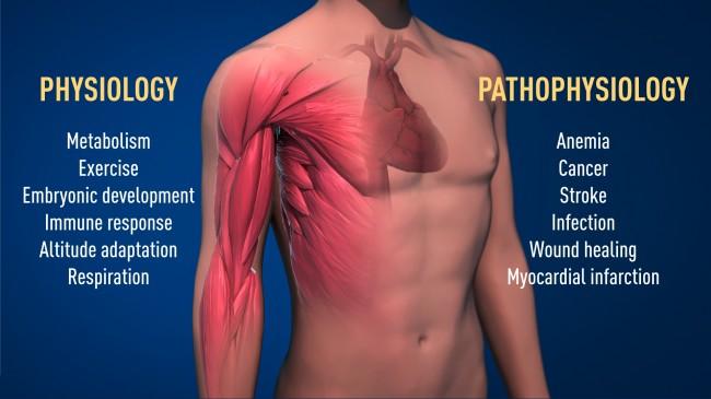 press-medicine2019-figure2.jpg