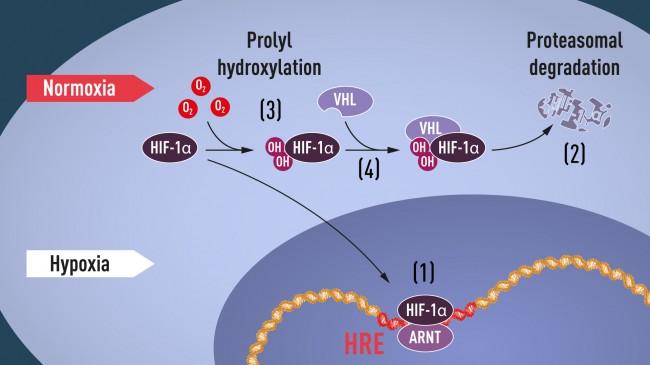 press-medicine2019-figure1 (1).jpg